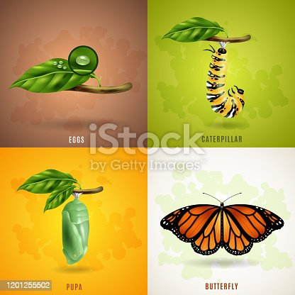 Butterfly 2x2 realistic design concept set developing stage of butterfly from eggs caterpillar pupa to imago vector illustration