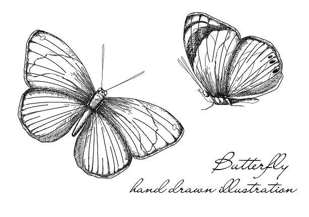 Butterfly Design vector art illustration