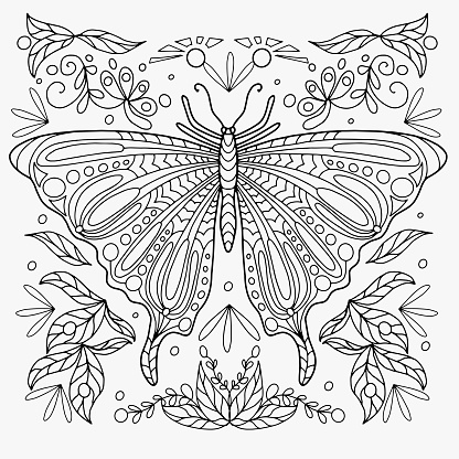 butterfly drawn with abstract floral ornament for coloring, vector for coloring