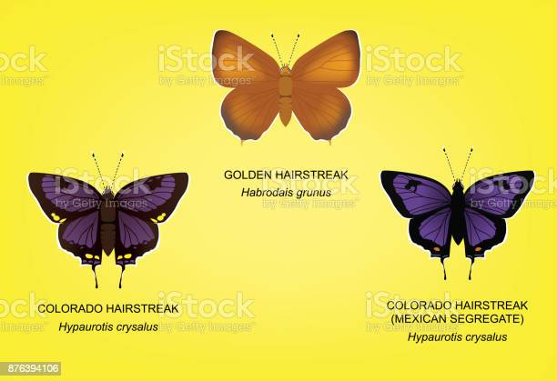 Butterfly hairstreak set vector illustration vector id876394106?b=1&k=6&m=876394106&s=612x612&h=me4w7txgybrrbwq37w6ryorigs4c73ino7gehwxjp y=