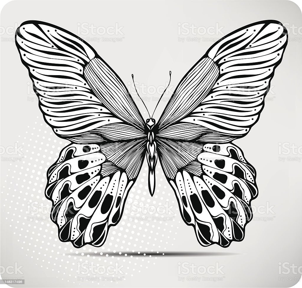 Butterfly, hand-drawing. Vector illustration. royalty-free stock vector art