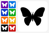 Butterfly Icon Square Button Set. The icon is in black on a white square with rounded corners. The are eight alternative button options on the left in purple, blue, navy, green, orange, yellow, black and red colors. The icon is in white against these vibrant backgrounds. The illustration is flat and will work well both online and in print.