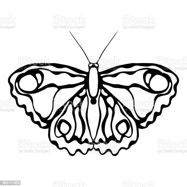 Butterfly isolated on white background butterfly design objects for vector id883121908?b=1&k=6&m=883121908&s=612x612&h=wqojdepyib4k1fd2nxnwuvsodqarcyzwklegafhtwoc=