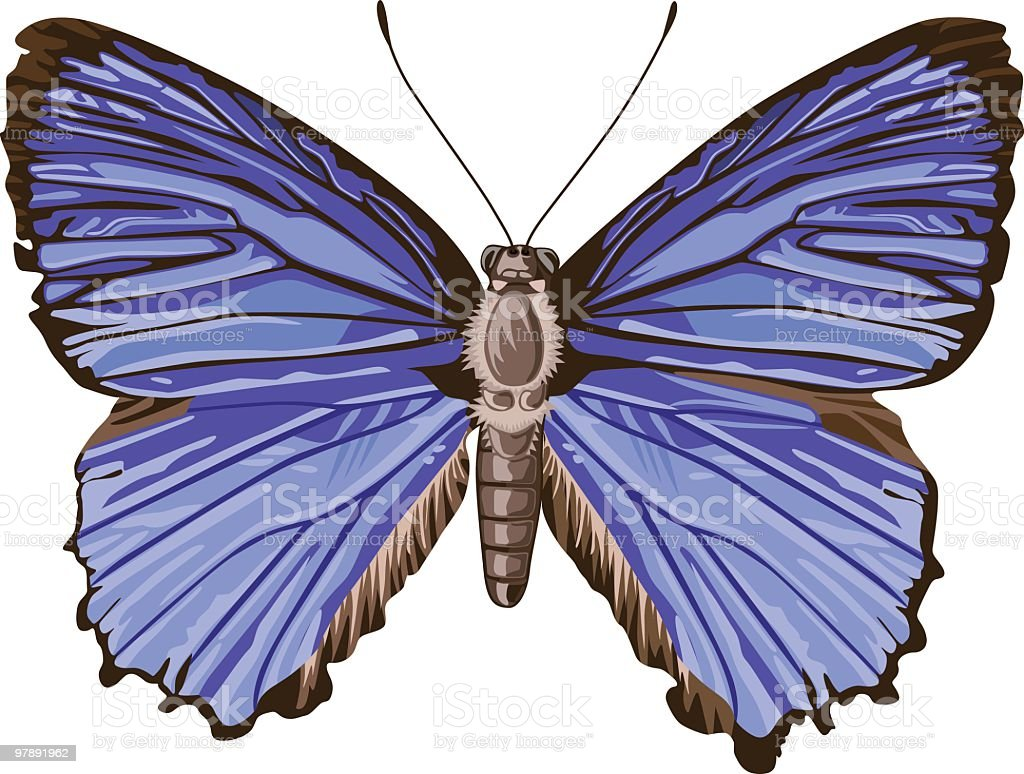 Butterfly Isolated royalty-free butterfly isolated stock vector art & more images of animal