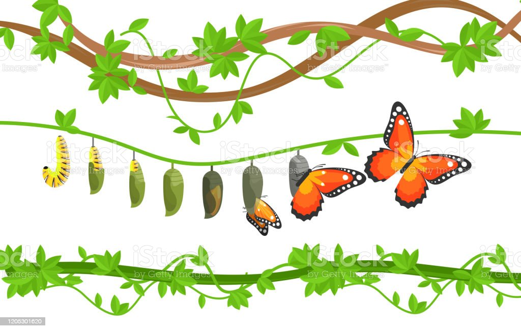 Butterfly Life Cycle Colorful Flat Vector Illustration Stock