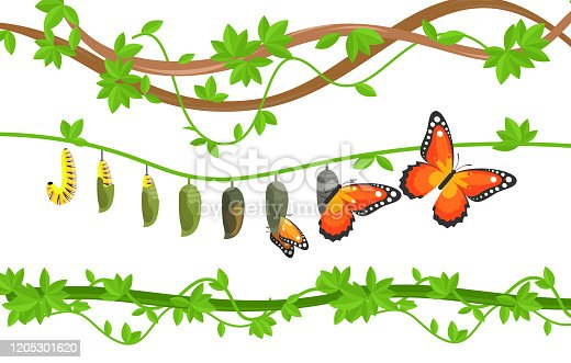 Butterfly life cycle colorful flat vector illustration. Caterpillar, cocoon and butterfly metamorphosis, transformation, change. Egg, larva, pupa and adult transition. Insects on tree leaves