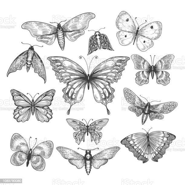Butterfly mariposa sketch vector id1083790080?b=1&k=6&m=1083790080&s=612x612&h=nrigtrkolqtngkkejcws ok6famf3go axkkofvhwvw=