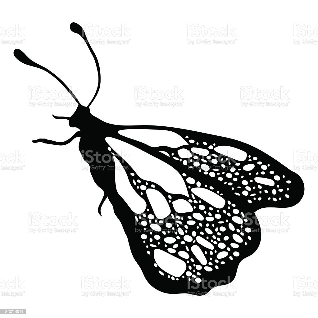 Farfalla Monocromatico Libro Da Colorare Illustrazioni Bianco E Nero