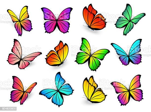 Butterfly multicolored vector set vector id924820920?b=1&k=6&m=924820920&s=612x612&h=s7m9 gznwfihhbwsunta2i1x2tju cyilrvuxfm3j0k=