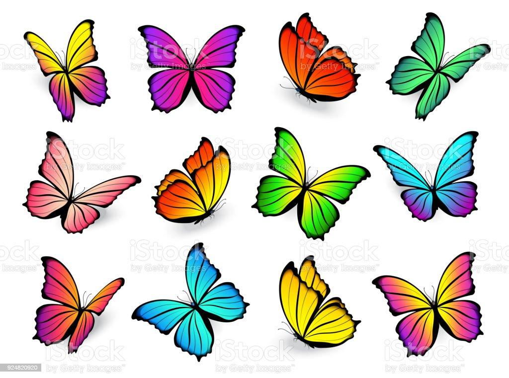 Butterfly multi-colored vector set. vector art illustration