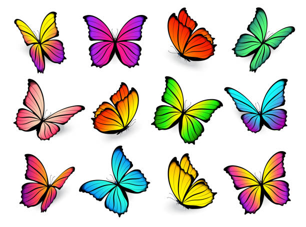 butterfly multi-colored vector set. - butterfly stock illustrations