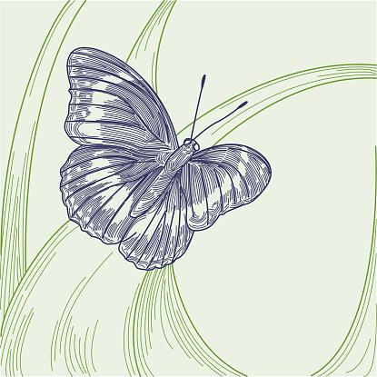 Butterfly on Tall Grass