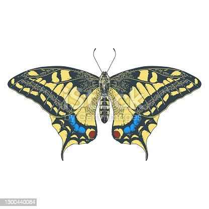 Butterfly Papilio machaon. Vector illustration for kids education.