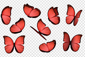 Butterfly vector. Red isolated butterflies. Insects with bright coloring on transparent background