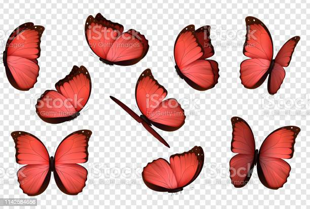 Butterfly red isolated butterflies vector id1142584656?b=1&k=6&m=1142584656&s=612x612&h=k35r14ubi500bm5u0a gaqje s5scvv1ep8oxlhhkuw=