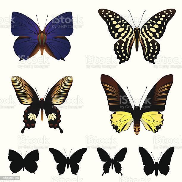 Butterfly set vector id455456239?b=1&k=6&m=455456239&s=612x612&h=7z3ew4woszsixwzg 1yq5qzo s6dvvl2h6zdbgge80g=
