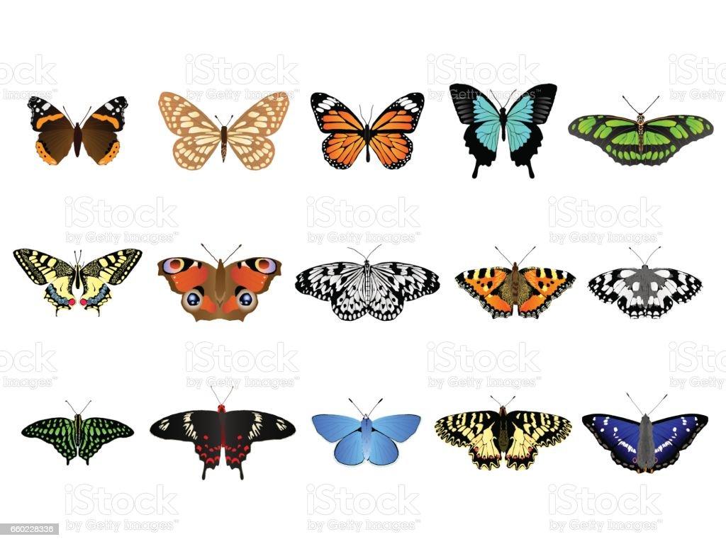 Schmetterlingssatz – Vektorgrafik