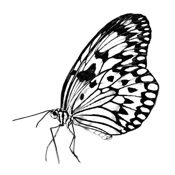 butterfly side view – artystyczna grafika wektorowa