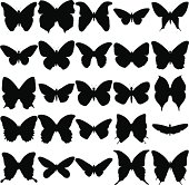 Butterfly silhouettes.