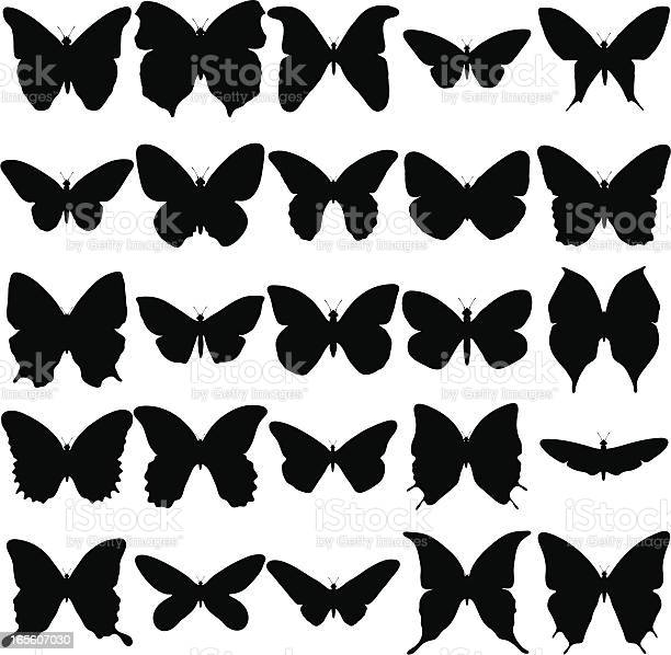 Butterfly silhouette collection vector id165607030?b=1&k=6&m=165607030&s=612x612&h=supxnf v9aldlgplytvqevo2drktkw78btur8ep ea0=