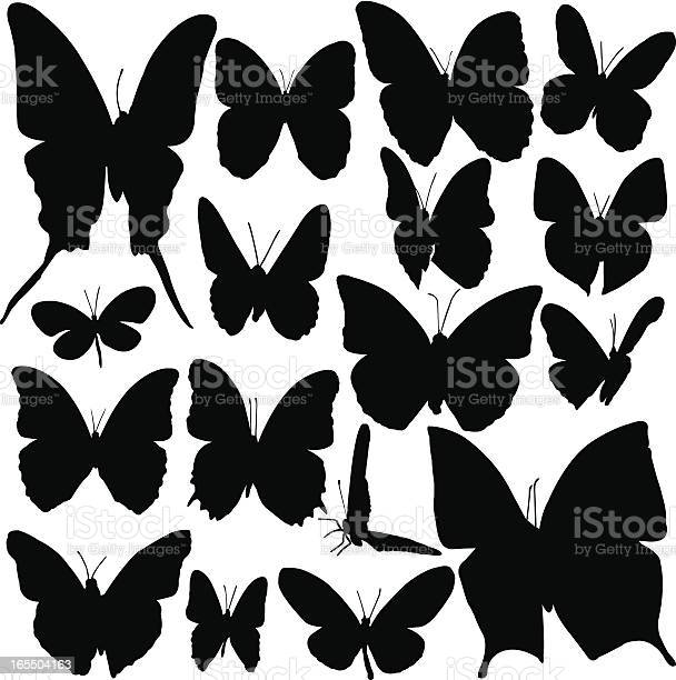 Butterfly silhouette set vector id165504163?b=1&k=6&m=165504163&s=612x612&h=mpenvdsvg4uoozm896i8pfkencenxfow5d8rioepp9g=