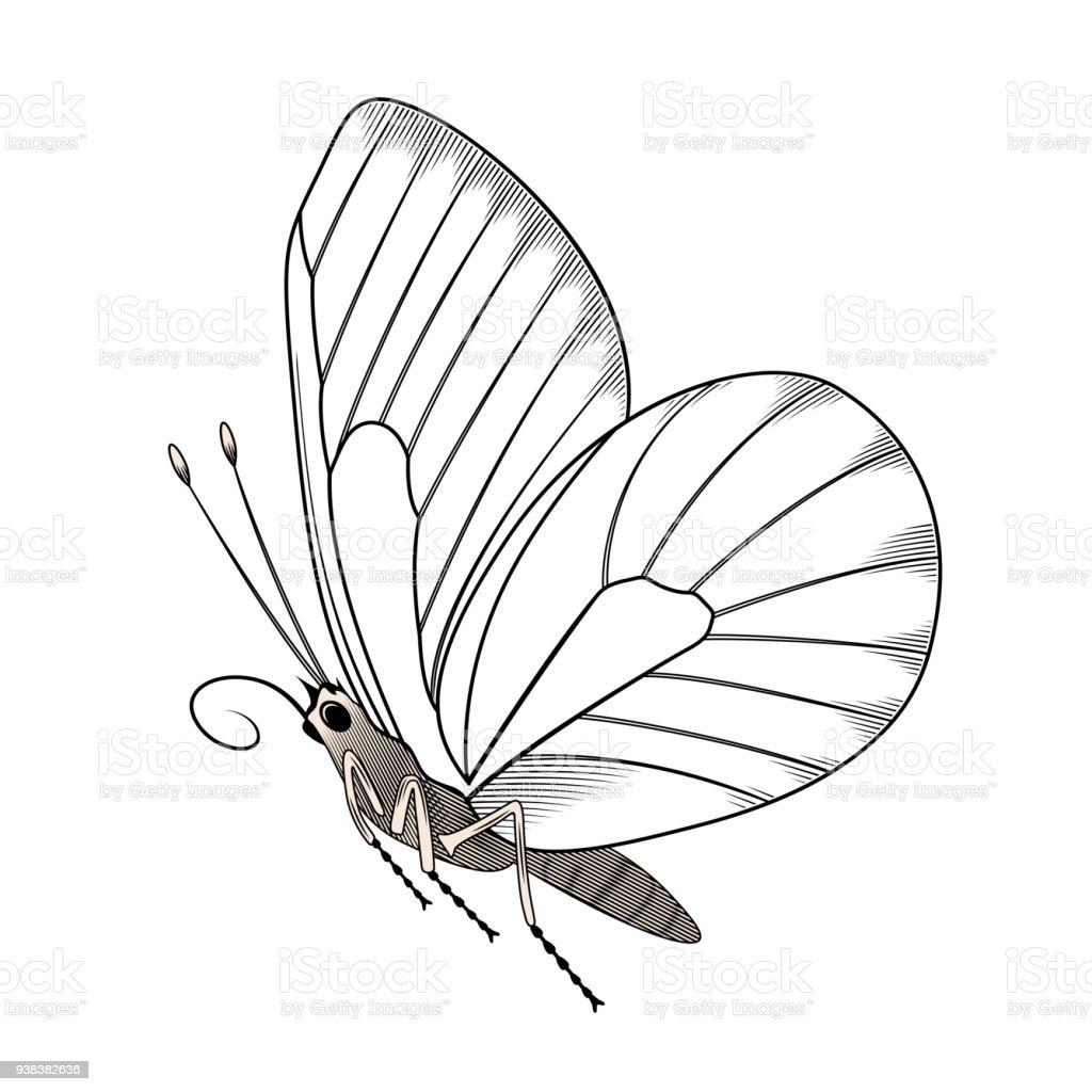 Schmetterling Schablone Mit Der Hand Zeichnen Für Lager Stock Vektor ...