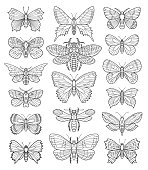 Butterfly vector doodle set.