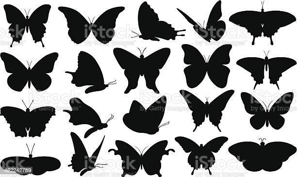 Butterfly vector id462242789?b=1&k=6&m=462242789&s=612x612&h=ceg99l2brbtqli4bl9gi 0ybkaib k5fdxqlmy5clc8=