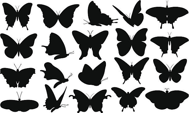 illustrations, cliparts, dessins animés et icônes de papillon - papillon
