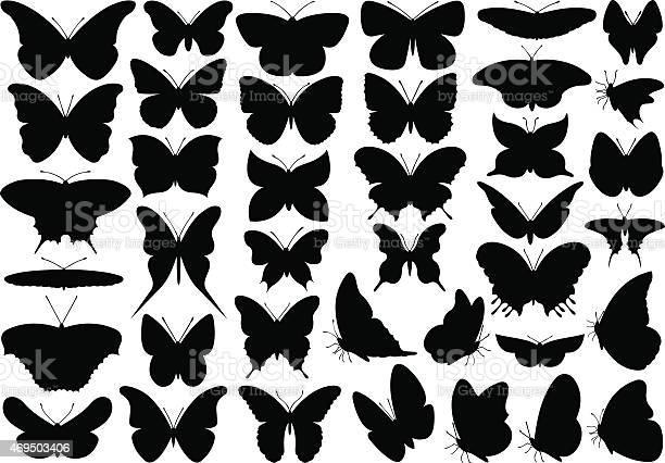 Butterfly vector id469503406?b=1&k=6&m=469503406&s=612x612&h=apepjwk 8bclqh9gemvsbbp8y0vxdlysmzzmnd6wdry=