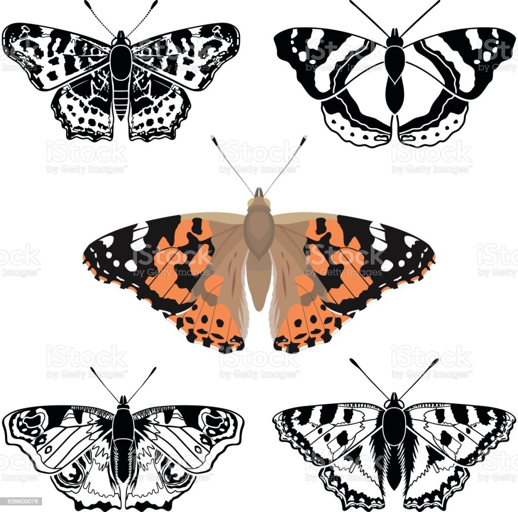 Butterfly - – Vektorgrafik