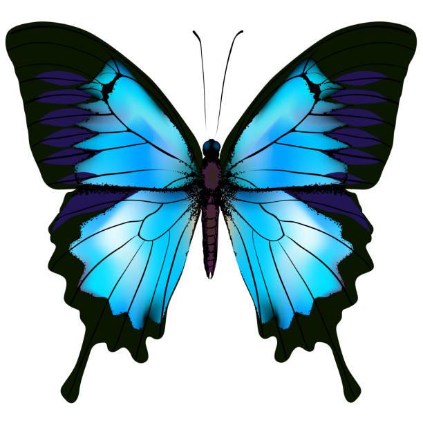 Schmetterling Vektor-Illustration. Schöne azurblaue isolierte Schmetterling – Vektorgrafik