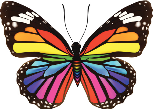 Butterfly - Vector llustration
