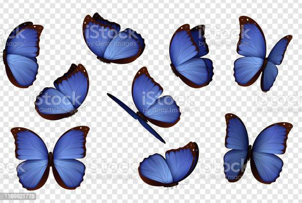 Butterfly vector purple isolated butterflies vector id1169621775?b=1&k=6&m=1169621775&s=612x612&h=bahi8f222ceq09 aemfqonhohhnjcx wufx913pu498=