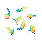 Set various color butterfly isolated on white background