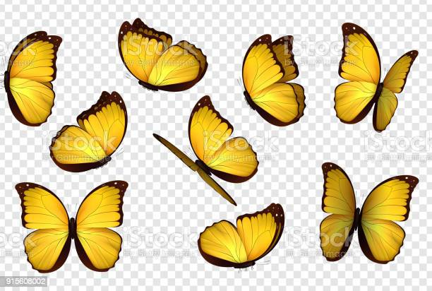Butterfly yellow vector illustration vector id915608002?b=1&k=6&m=915608002&s=612x612&h= wfuni5lbujoald fduz 8slqhpux3ardlnmepgs05e=