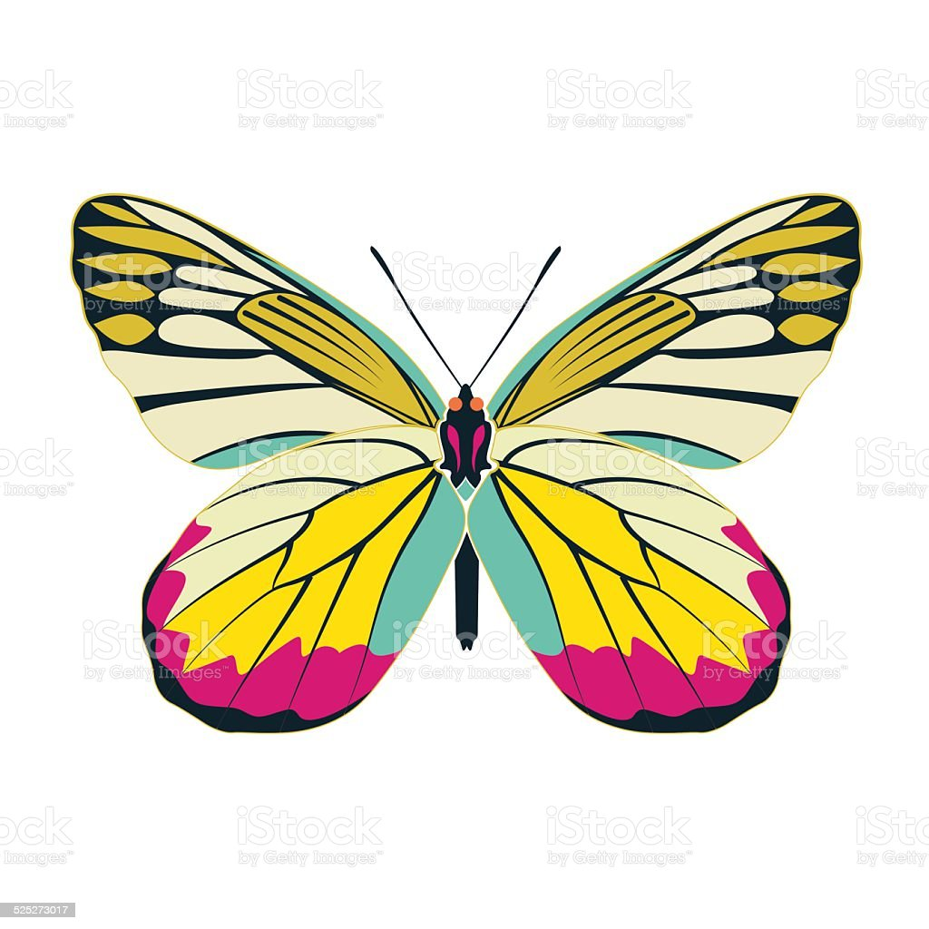 butterfly yellow wing abstract on white background vector art illustration
