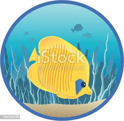istock Butterflyfish / Poisson papillon 154210736