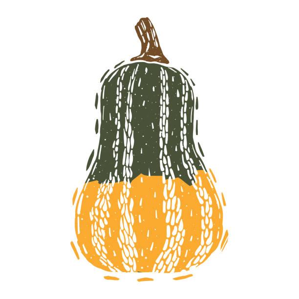 butternut oder honeynut squash-linolschnitt-holzschnitt-vektor-illustration - flaschenkürbis stock-grafiken, -clipart, -cartoons und -symbole