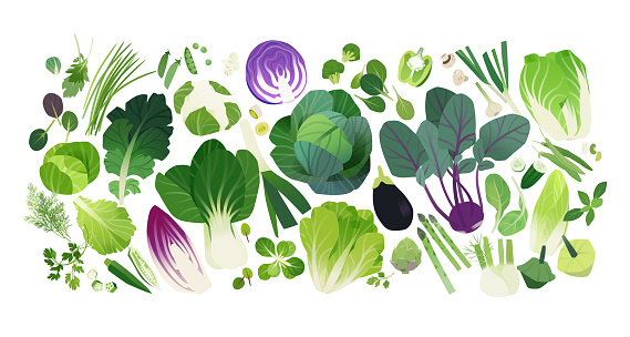 Cabbage and leafy greens clip art icons