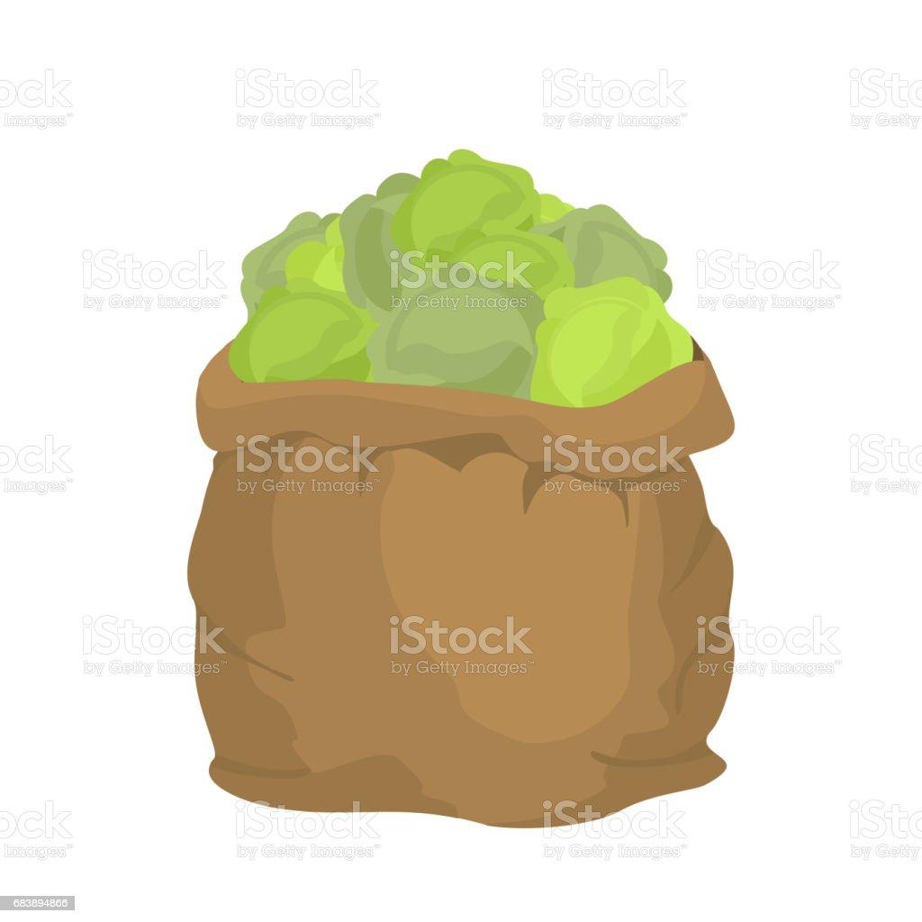 Cabbage Burlap bag. sack of vegetables. big crop on farm. sackful cabbage vector art illustration