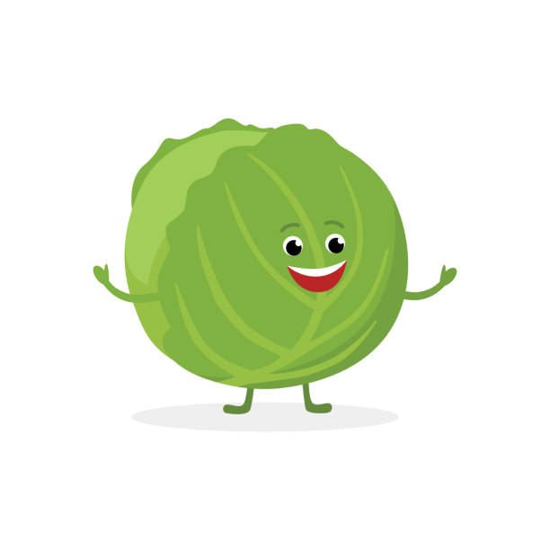 cabbage cartoon character isolated on white background. healthy food funny mascot vector illustration in flat design. - square foot garden stock illustrations, clip art, cartoons, & icons