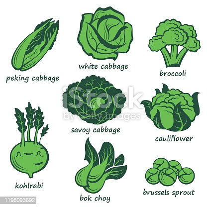 collection of various green cabbage images isolated on white background