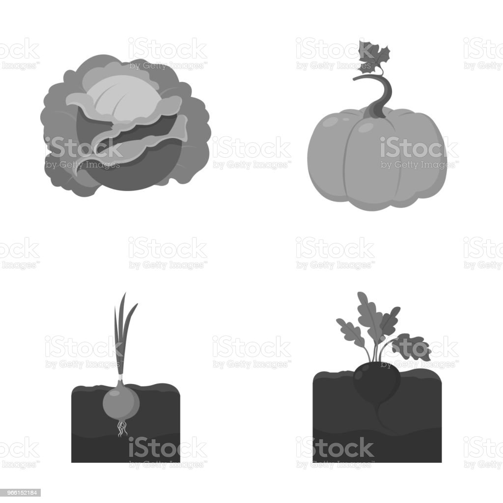 Cabbage, pumpkin, onion, buriak.Plant set collection icons in monochrome style vector symbol stock illustration web. - Royalty-free Cabbage stock vector