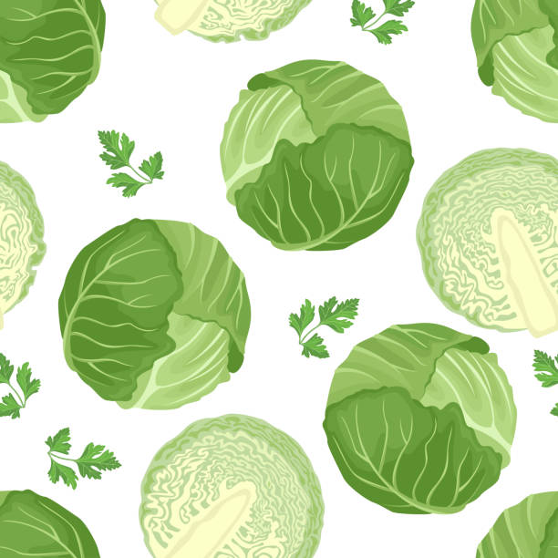 Cabbage seamless pattern on white background. Green cabbage whole and half. Vector illustration of fresh vegetables in cartoon simple flat style. Cabbage seamless pattern on white background. Green cabbage whole and half. Vector illustration of fresh vegetables in cartoon simple flat style. cabbage stock illustrations