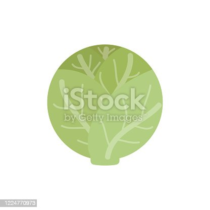Cabbage vector illustration icon. Head white lettuce vegetable. Isolated.