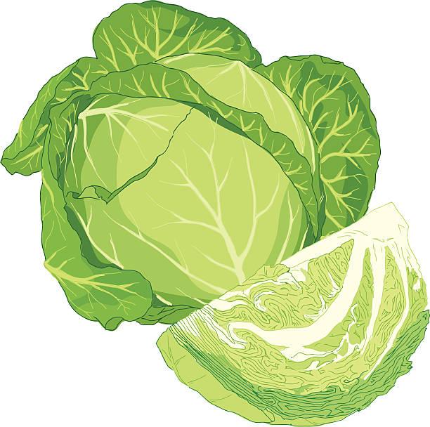 Cabbage on Lettuce Clip Art