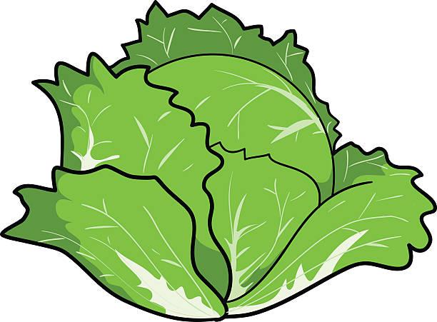 Small Cabbage on Lettuce Clip Art