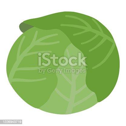 cabbage vegetable green illustration