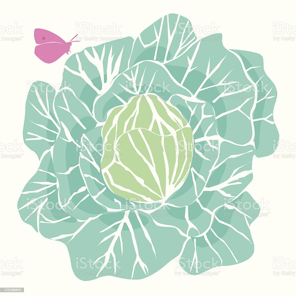 Cabbage with Butterfly vector art illustration